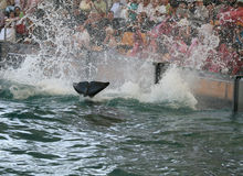 Crowd at killer whale show Royalty Free Stock Photography