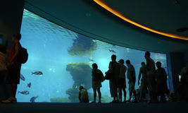 Crowd looking at aquarium. Crowd in aquarium looking into large fish tank Stock Photos