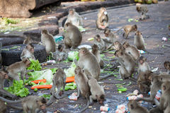 Crowd of monkeys scamble food Stock Photos
