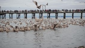 A crowd of people at White Rock looking at the natural phenomena of thousands of dead anchovies being eaten by wildlife.