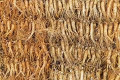 Crowd of real ginseng Stock Photo