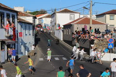 A crowd scatters as a bull charges. A bull charges up a village street on the Portuguese island of Terceira. The event takes place as part of the Sanjoaninas, a Stock Photos