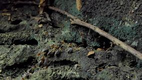 Termites in tropical rain forest. stock video