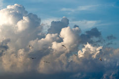 Crowd of wild birds against blue sky stock images