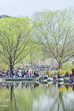 Crowd at Yuyuantan park during Spring Cherry Tree Blossom, Beijing, China Stock Photo