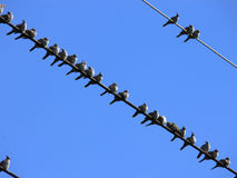 Crowded. A pigeon line-up Stock Photo