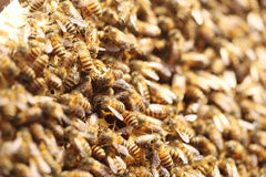 Crowded bees Royalty Free Stock Photo