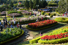 Crowded,  Dalat flower park, festival, spring, tourist Royalty Free Stock Photos
