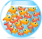 Crowded fishbowl full of fish. Ees, with fifteen yellow and orange cute fishes  illustration Royalty Free Stock Photography