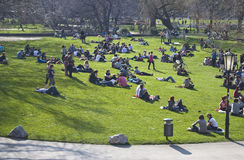 Crowded grass park lawn Royalty Free Stock Photography