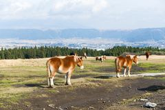 Crowded Horse farm at highland. Beautiful sightseeing scenery landscape Royalty Free Stock Images