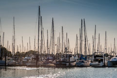 Crowded masts in Point Roberts marina. At twilight, Washington state, USA royalty free stock photography