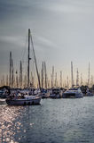 Crowded masts and sailing boats in Point Roberts marina. At twilight with man aboard, Washington State, USA royalty free stock images