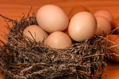 Crowded, Nest, Egg, Full Stock Photos