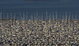 Crowded Sailboat Marina Seattle Royalty Free Stock Image