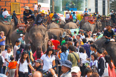 Crowded Sea of Elephants and People H Stock Images
