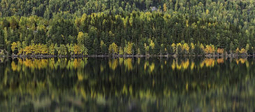 Crowded waterfront. A line of autumn trees reflected in the Strondafjord near Fagernes. Fagernes, Oppland, Norway Stock Photo