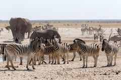 Crowded waterhole with Elephants Royalty Free Stock Photography