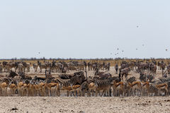 Crowded waterhole with wild animals Stock Photo