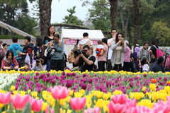 Crowds at flower show Stock Images