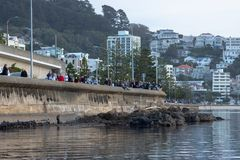 Crowds Gather At Shoreline To View Whale, Wellington New Zealand. 2018 royalty free stock photos