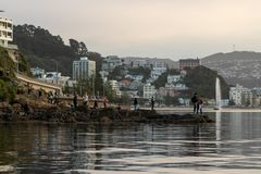 Crowds Gather At Shoreline To View Whale, Wellington New Zealand. 2018 royalty free stock image
