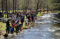 Crowds of people helping to stock the water with fish,springtime,Saratoga State Park,NY,2016 Royalty Free Stock Photography