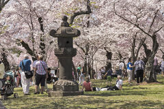 Crowds of tourists at the Cherry Blossom Festival Stock Image