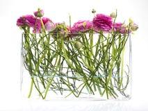 crowfooten blommar den nya glass rosa vasen Arkivbilder