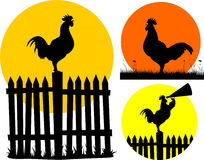 crowing rooster on the sunrise background Royalty Free Stock Photo