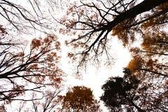 Crown autumn trees Royalty Free Stock Image