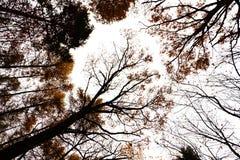 Crown autumn trees Stock Photos