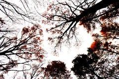 Crown autumn trees Stock Photo