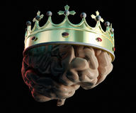 Crown on the brain Stock Photos