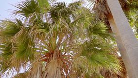 Crown and fronds of a tropical palm tree. Against a clear sunny blue sky symbolic of travel and summer vacations stock video