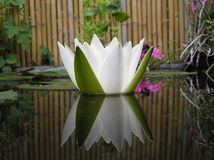 Crown jewel. Photograph of a very bright white water lilly reflected in the water of the pond Stock Photography