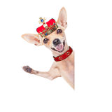 Crown king dog Stock Images