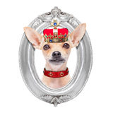 Crown king dog stock photos