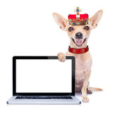 Crown king dog Royalty Free Stock Photo
