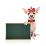 Crown king dog royalty free stock images