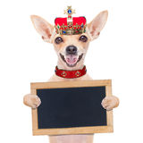 Crown king dog royalty free stock image
