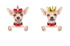 Crown king dog Stock Photos