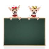 Crown king dog Stock Image