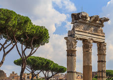 Crown Mediterranean pine trees. Next to an ancient colonnade in Rome Stock Photos