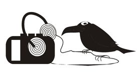 Crow. A crow music lover with player and headphones (player has a blank space to insert thare some information Stock Photos