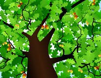 Free Crown Of A Tree Royalty Free Stock Photos - 15624968