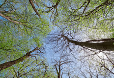 Free Crown Of A Trees In Deciduous (leaf) Forest Stock Photography - 28109802