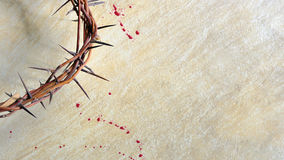 Free Crown Of Thorns Stock Photos - 24027683