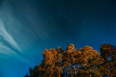 Crown Of Pine Trees Woods Under Night Starry Sky. Night Landscape With Natural Real Glowing Stars Over Forest