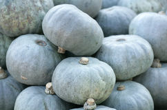 Crown prince squash Stock Photography